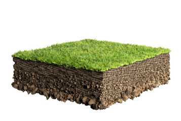 Wall Mural - grass and soil profile