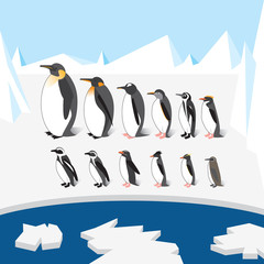 Set of different species of penguins on the ice