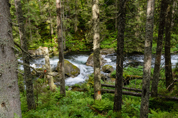 Tatra river, Tatra National Park, Poland