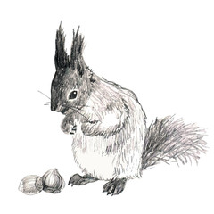 pencil sketch illustration of the squirrel