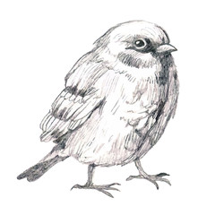 pencil sketch illustration with bird