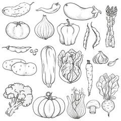 Big set of vegetables