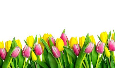 Tulpen Freisteller Karte