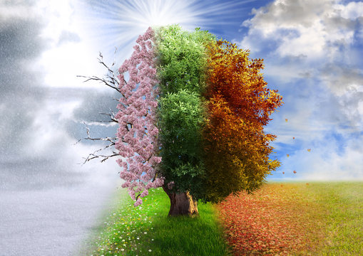 Four season tree, photo manipulation, magical, nature