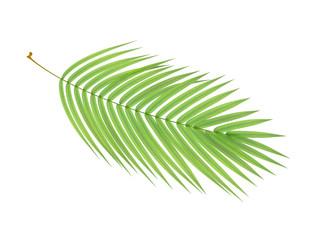 tropical plant branch