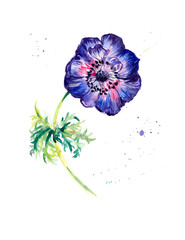 Flower anemone. Greeting cards.