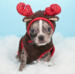 Wall Mural - Christmas Reindeer Puppy