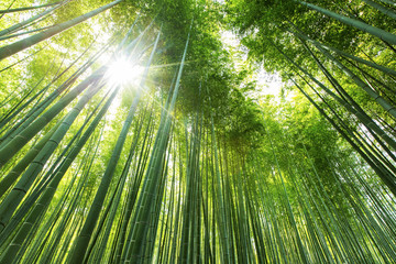 Printed kitchen splashbacks Bamboo Bamboo forest Kyoto - Japan
