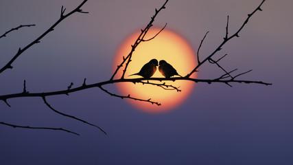 Love Fotoväggar