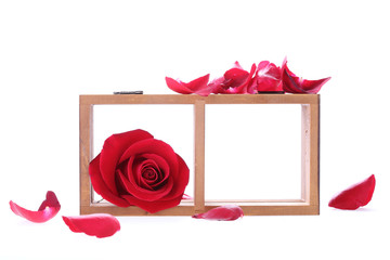 wood shelf decorated with red rose flowers isolated