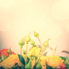 Pastel flowers on tender background, color filters