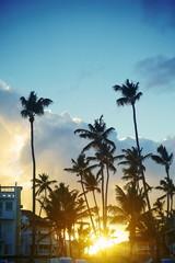 Tropical summer beach with palm leaf tree branch  sea