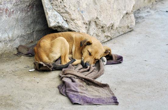 Abandoned dog lying on the ground
