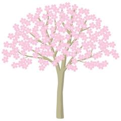 桜 桜の木 花