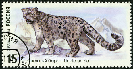 "RUSSIA - 2014: shows snow leopard, series ""The Fauna Of Russia"""