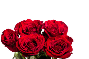 Bright red roses isolated on white
