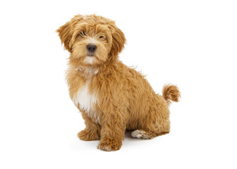 Adorable Fluffy Puppy Sitting