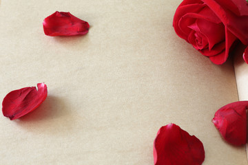 red rose flower on blank paper page for creative