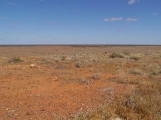 A desert landscape in Australia