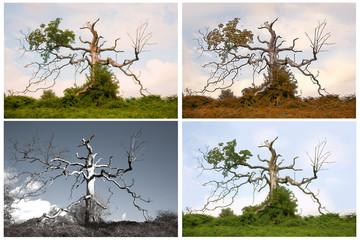 Seasons of a Dead Tree