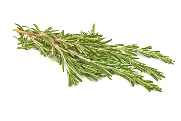 Brunch of rosemary isolated on white background