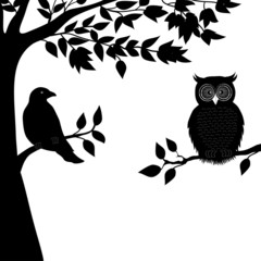 A dove and owl on branch