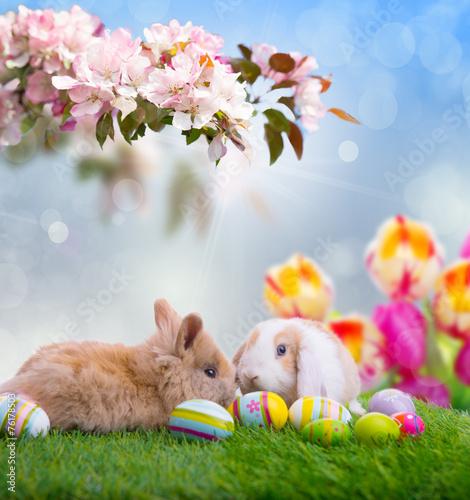 природа кролик цветы тюльпаны яйца пасха  № 271766 бесплатно