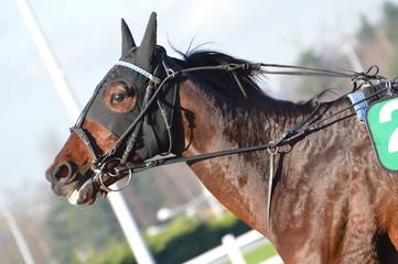 trotteur cheval