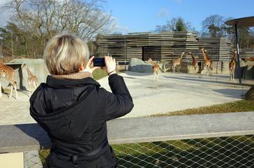 Une femme prenant des photos dans un zoo
