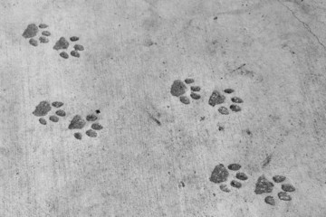 Panther footprints (pawprint imitation)