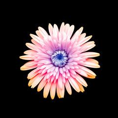 rainbow flower isolated on black