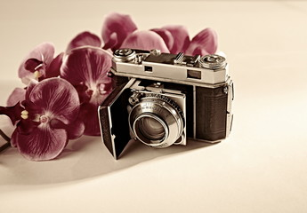 Old camera with flowers