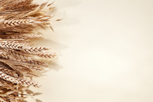 Ears of wheat over white paper.