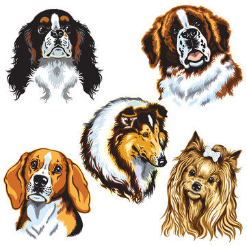 dogs heads