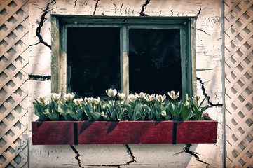 Old Window in a Cracked Wall with a Flower Box - Retro, Faded, I