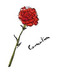 Illustration with carnation flower Œ