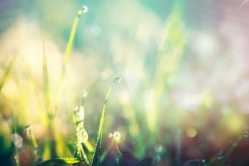 bright background grass with dew drops in the sun