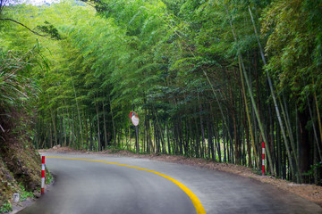 road to the peak with bamboos on side
