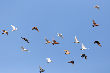 Pigeons on a background of blue sky