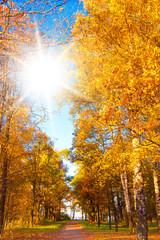 Under Sun Forest Landscape