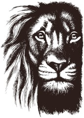 Printed roller blinds Hand drawn Sketch of animals Lion head vector