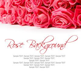 Rose blooms