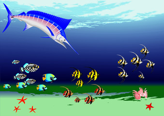 underwater with fishs