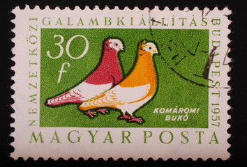Hungary  1957: Postage stamp image of two colorful pigeons