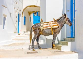 mule sitting in the street in Langada in Amorgos island Greece