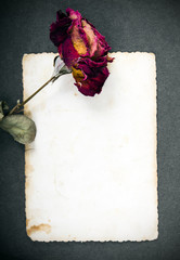 Dried red rose and blank photograph
