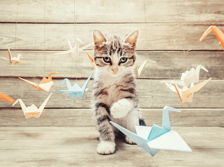 Kitten playing with colorful paper birds cranes