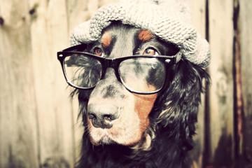 abschätziger blick agent detektiv hund nerd intelleigent
