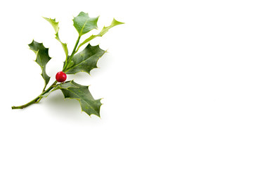Christmas Holly, with bright red berrie