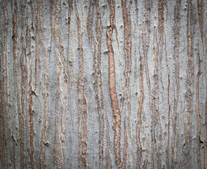 Bark of Elm. Seamless Tileable Texture , background